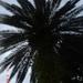 WELNESSKUUR---------------MONTE-2008 NEGRO (101)
