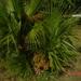 WELNESSKUUR---------------MONTE-2008 NEGRO (102)