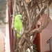 NICARAGUA---MEI-2010 (22)