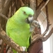 NICARAGUA---MEI-2010 (23)