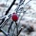 2012_01_15 Couvin 10