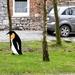 2012_01_29 Froidchapelle 18