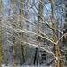 2012_02_04 Denderleeuw Wellemeersen 014