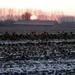 2012_02_11 Opwijk 12