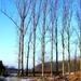 2012_02_11 Opwijk 32