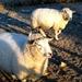 2012_02_11 Opwijk 36