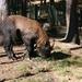 Thiumphu : zoo