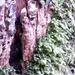 2012_03_18 Houyet 19