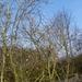 019-Ook de Magnolia komt tot bloei