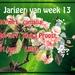 Jarigen van week 13
