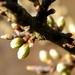2012_04_01 Villers-Deux-Eglises 19