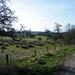 2012_04_01 Villers-Deux-Eglises 21 Senzeilles