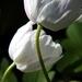 2012_04_08 Petigny 16