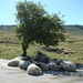 lesbos - schapen in de schaduw van een olijfboom