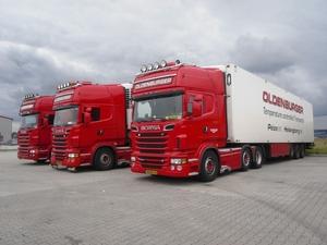3 X Oldenburger