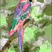 papegaai geschilderd