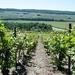 2012_05_26 Champagne prospectie 58