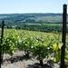 2012_05_26 Champagne prospectie 60