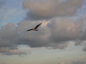 ploumanach 2008 11-10-08 340