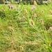 2012_08_02 PNVH Vierves-sur-Viroin 052