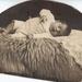 albert ramaker oud 8 weken gekiekt op woensdag 2 dec 1918