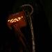 MEYBOOM 2006 033