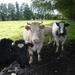 wandeldag Nestlé Den Bunt 2012 017