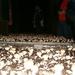 DAGUITSTAP 9-10-2004 008