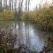 2012_11_18 Denderleeuw 03