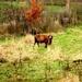 2012_11_18 Denderleeuw 28