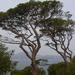 bomenpracht