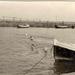 Oude haven - zwemmen