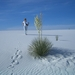 Maagdelijke zandduinen