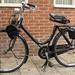 Solex peperbus  1949