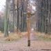 wandeling westerlo 1 (10) - DE STER