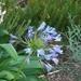 Kirstenbosch Kaapstad