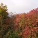 002-Herfstkleuren