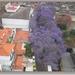 sized_IMG_4588 Jacaranda.