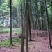 2007_06_RONSE_door het bos na het rustpunt