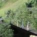 Aviat Tirol 2008 008