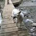 20080919 014 Oberstdorf Rappenseehut