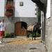 Navarra hugo 2008 038