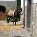 Navarra hugo 2008 047