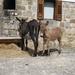 Navarra hugo 2008 052