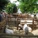 Navarra hugo 2008 060