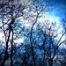 2014_03_23 Natuurwandeling Wellemeersen 023