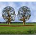 Bomen-hoofden