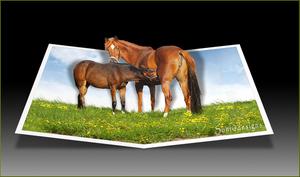 buiten kader paarden