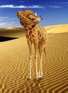 koop in hals giraffe