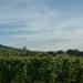 3 Rudesheim, wandeling naar Asbach _P1190922